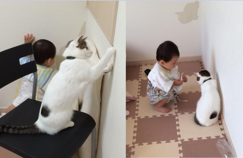 日本一名網友近日目睹家裡的貓咪正在教他的兒子如何將壁紙撕下來,一人一貓做壞事的模樣相當逗趣。(圖擷取自推特@fukamitoneko)