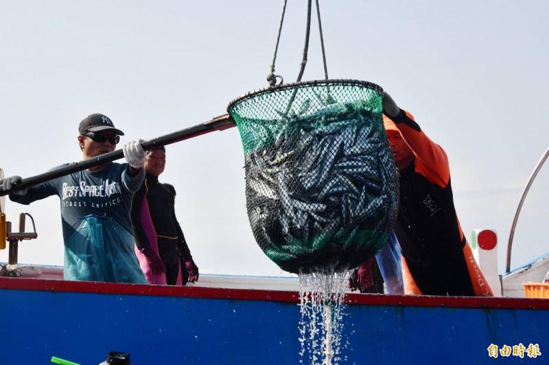 恆春飛魚船隊捕撈技術特殊。(記者蔡宗憲攝)
