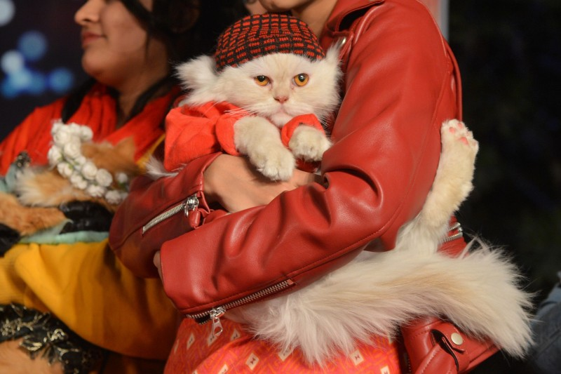 日本一項研究結果顯示,貓咪可能具有辨別自己名字的能力。(法新社)