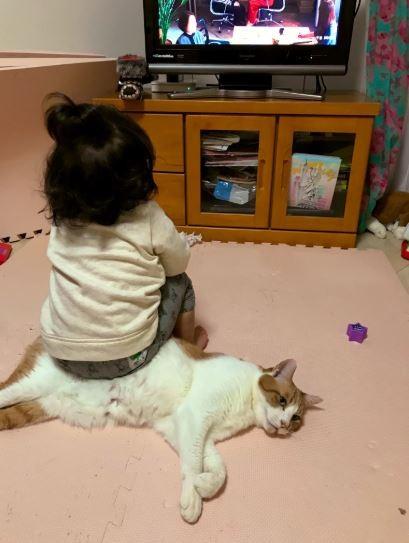 女兒坐在貓咪上,貓咪一臉厭世。(圖擷取自推特)