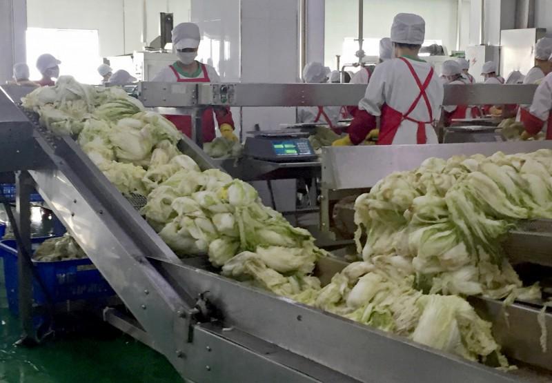 北韓「平安南道平城泡菜工廠」傳出陷入經營危機。(美聯社)