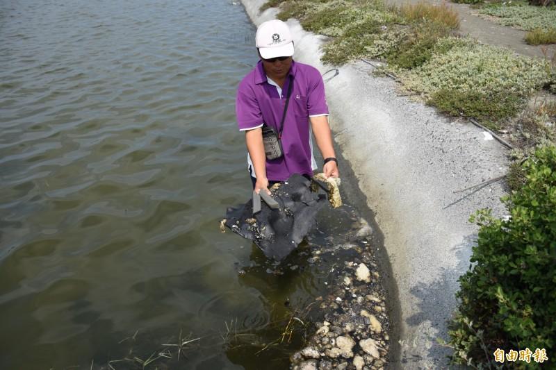 魚塭飄落許多不明物。(記者林國賢攝)