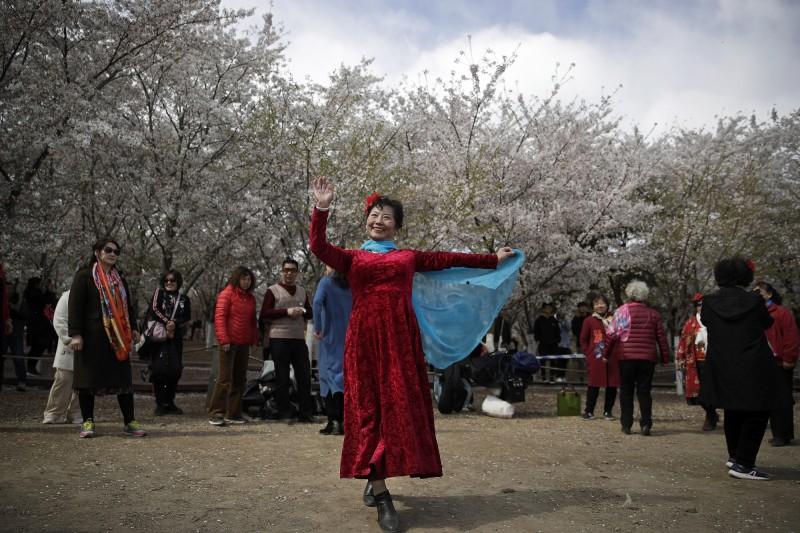 清明節連假中國人湧入北京各大公園賞花,卻屢屢發生不文明行為,包括攀登樹木、摘花、破壞園內植物、在湖泊釣魚、就地擺攤,北京市公園管理中心擬將這些遊客列入黑名單。圖為中國女遊客在北京玉淵潭公園的櫻花下有感而發突然起舞。(美聯社)