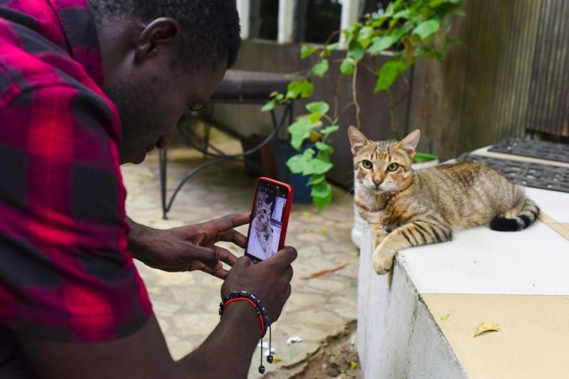 英國科學期刊《科學報告》(Scientific Reports)4日刊登了一份研究報告,指出貓確實聽得懂自己的名字,也能分辨出飼主與其他人的聲音,也能查覺飼主的表情變化。(法新社資料照)
