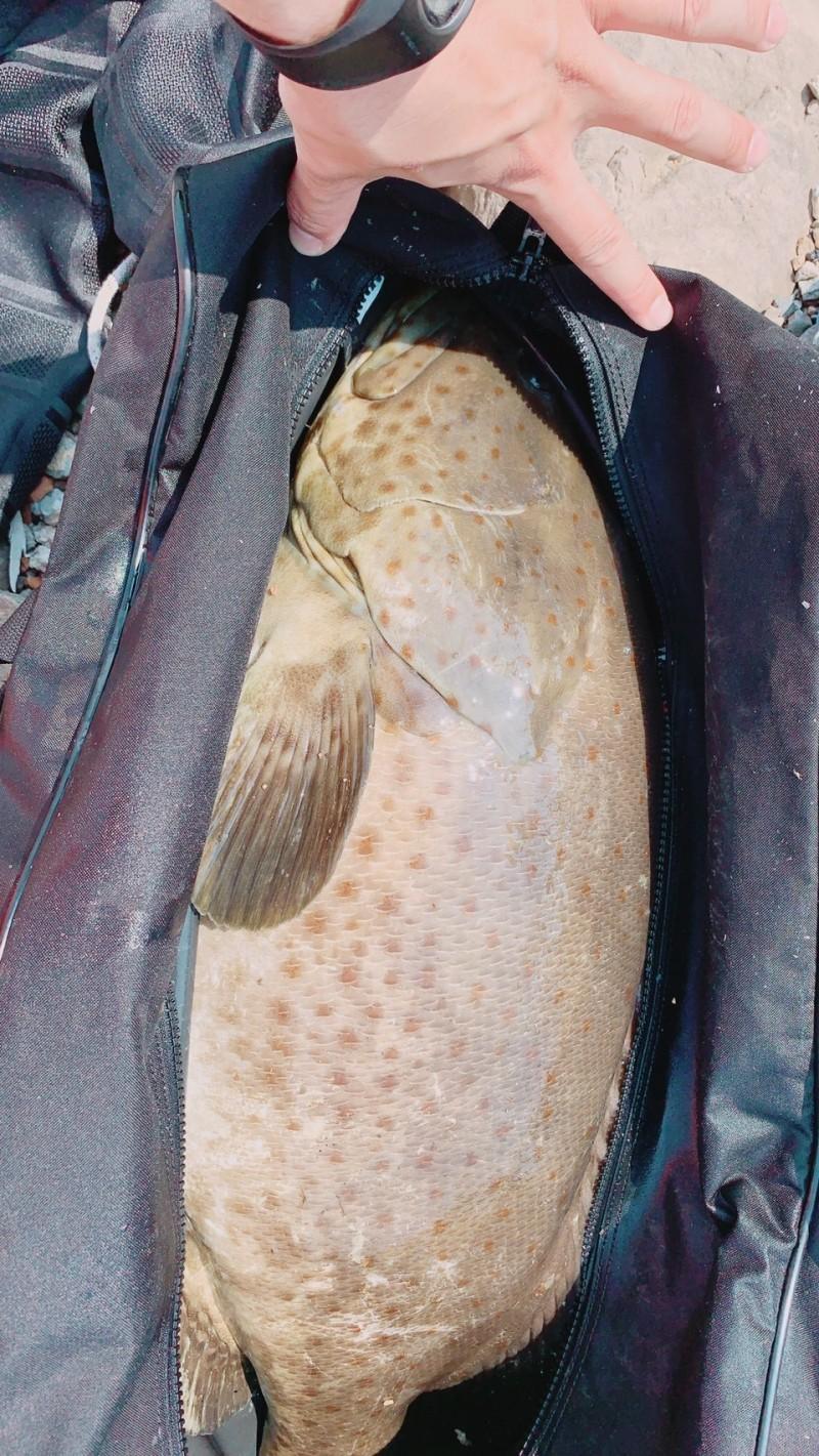 岸巡人員在周男的隨身包中發現大石斑魚。(記者吳昇儒翻攝)