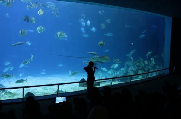 鯊魚從不吃旁邊小魚,網疑海生館鯊魚吃素,釣出粉磚小編親自解惑。(記者蔡宗憲翻攝)