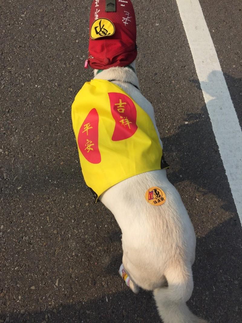 白沙屯媽祖的信徒替愛犬穿背心、戴「勇」帽。(民眾提供)
