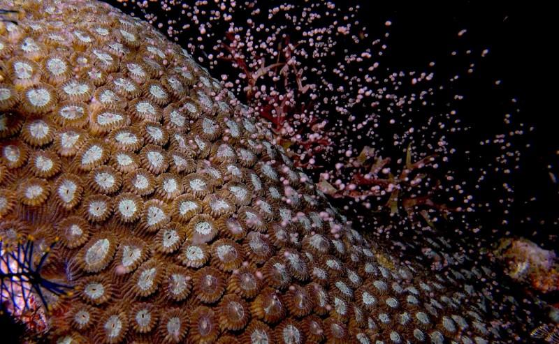 堆置的污泥離後壁湖保護區很近,學者憂心一旦下雨沖刷流下海裡,將影響珊瑚產卵。(記者蔡宗憲翻攝)