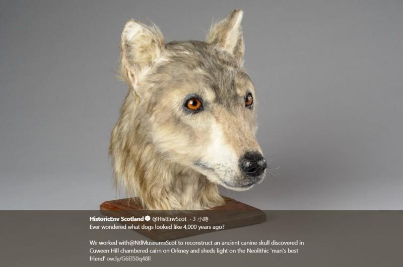 學者在蘇格蘭北部的奧克尼群島(Orkney)發現了4500年前的狗狗頭骨化石,最近交由專家為狗狗做出了3D建模,窺見新石器時代狗狗的長相。(圖擷取自蘇格蘭歷史環境局推特)