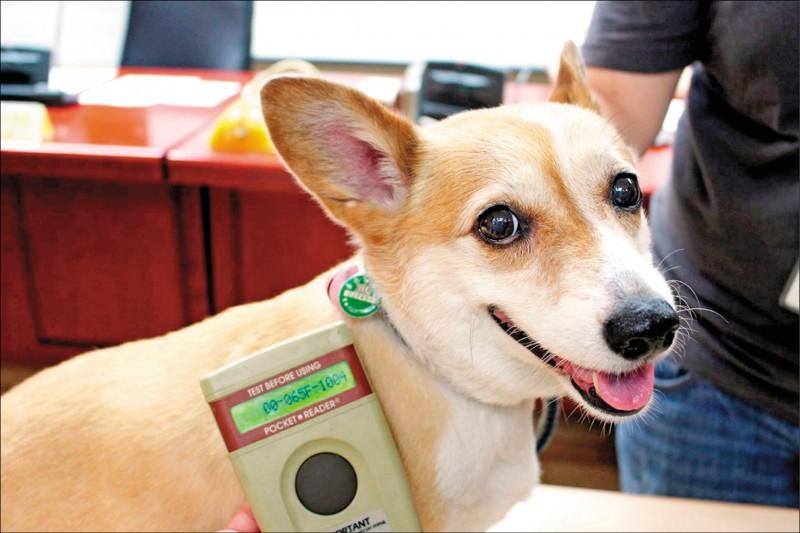 透過掃描走失犬身上是否有植入晶片,即可獲得飼主資料。(圖片提供/鄭祝菁)
