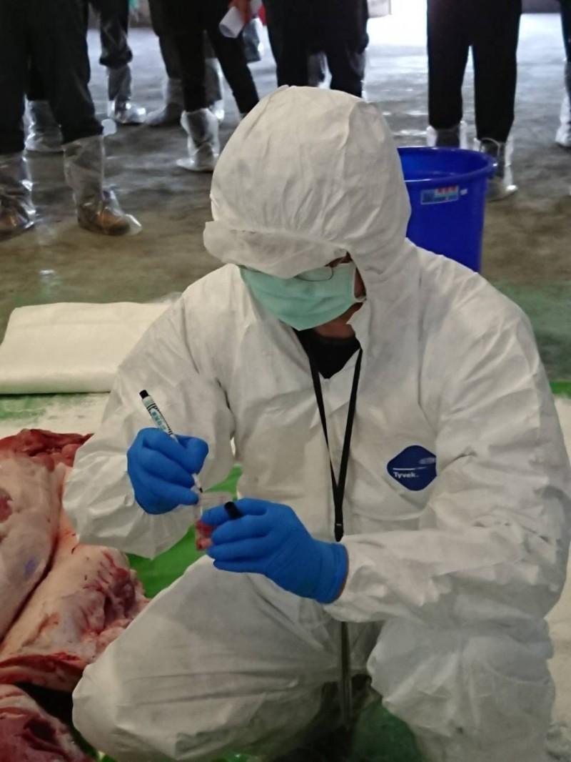 農委會持續強化非洲豬瘟防疫工作。(農委會提供)