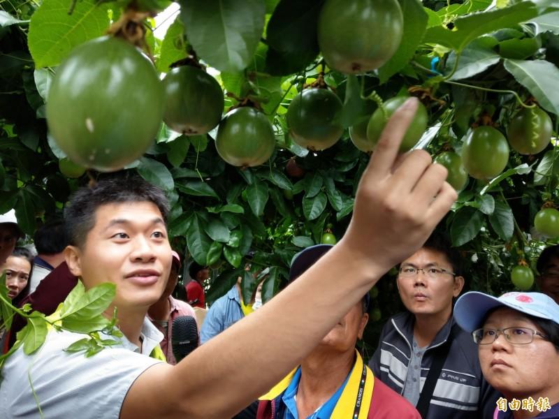 台中農改場人員(左)在集集鎮推廣百香果照燈產季調節,吸引許多果農到場觀摩。(記者劉濱銓攝)