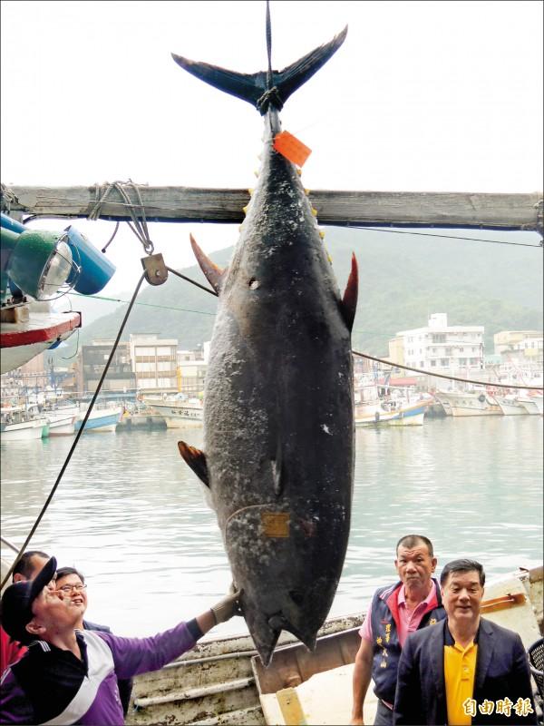 蘇澳籍漁船金協益二六八號,捕獲全國「第一鮪」,昨運回南方澳拍賣。(記者江志雄攝)