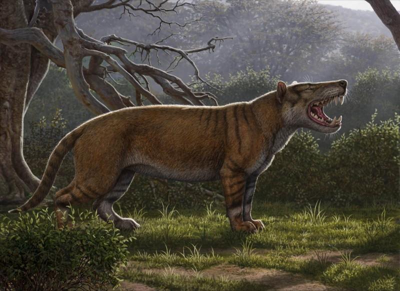 畫家筆下還原巨獅模樣,顯示牠是一隻擁有條紋和超大尖牙的巨型貓科動物。(法新社)
