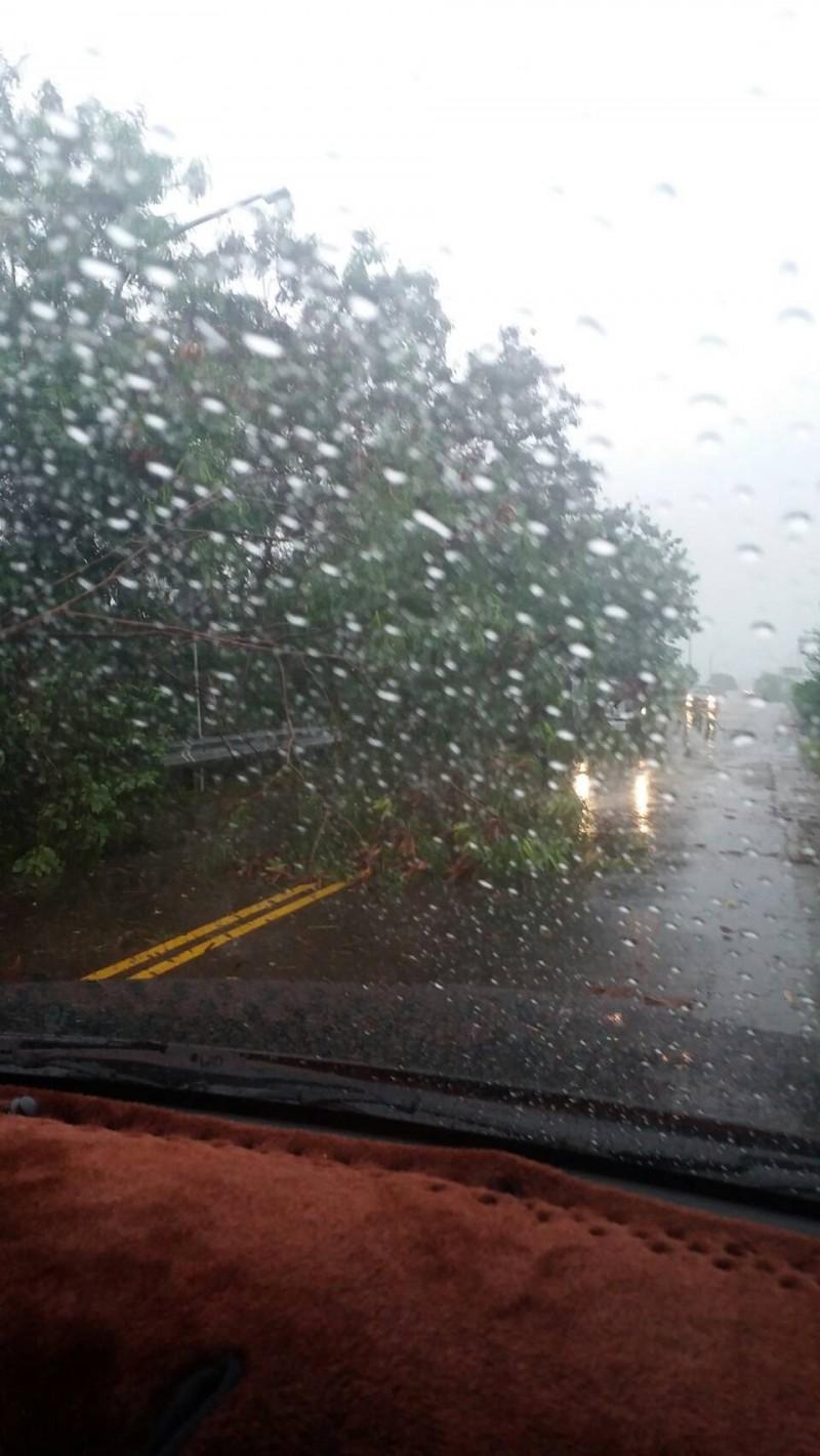 中市下大雨 烏日往南屯筏子東街路樹倒塌