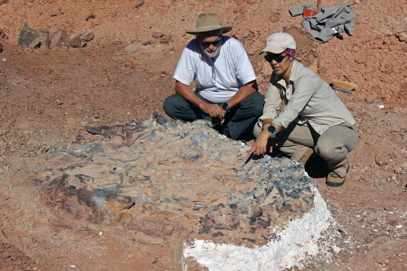 這處地區藏有約近10隻不同種類的恐龍化石,這些化石有近2.2億年歷史,相當具有研究價值。(法新社)