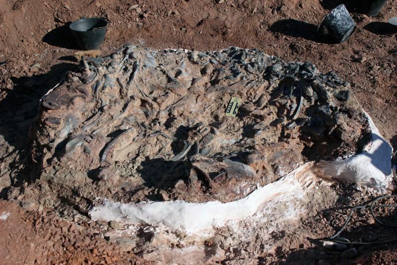 考古學家在阿根廷西部發現了「恐龍墓地」,這處地區藏有約近10隻不同種類的恐龍化石。(法新社)
