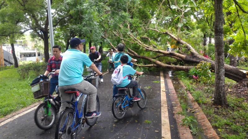 大雨造成東豐綠廊樹倒 台中市觀旅局派員移除