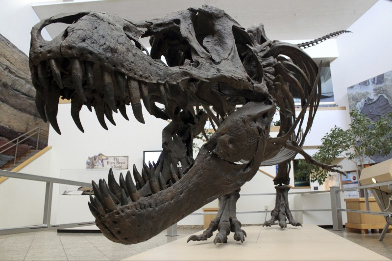 一名日本高中生去校外教學,想不到竟在博物館內的琥珀採掘體驗場中挖到了9000萬年前的暴龍牙齒化石。示意圖,與本新聞無關。(美聯社資料照)