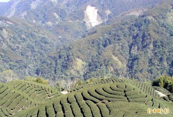 南投縣竹山鎮「八卦茶園」美景之中,也蘊藏著農友刻苦耐勞的精神。(記者謝介裕攝)