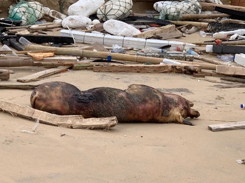 中國無力控制非洲豬瘟疫情,全球各國人人自危。(歐新社)