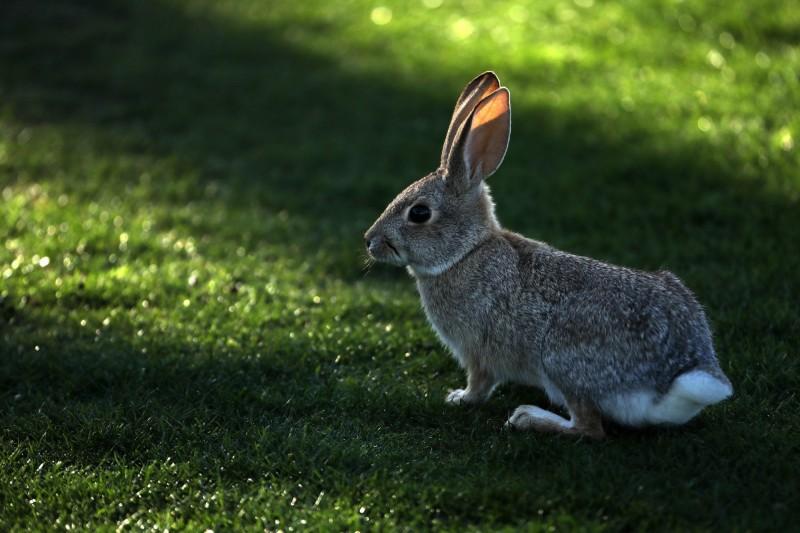中國蔡姓男子翻新老屋後放鞭炮慶祝,卻造成隔壁養殖場的上萬隻兔子死亡。示意圖。(法新社)