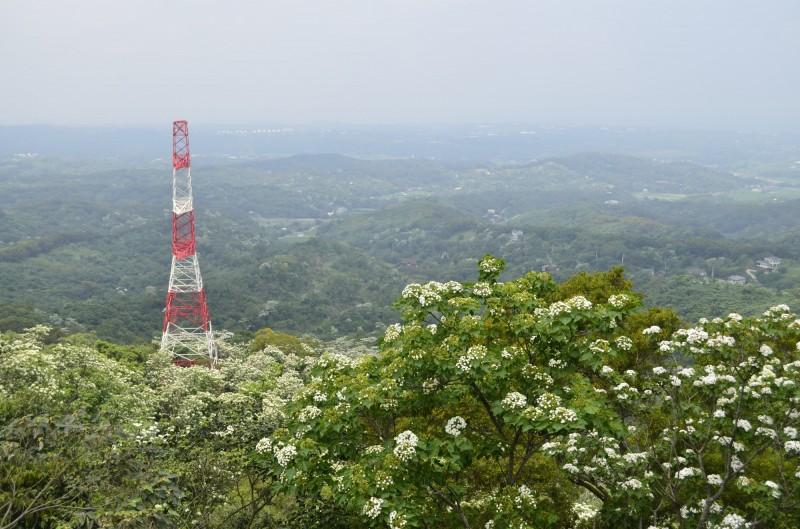 苗栗縣銅鑼鄉「天空步道」是全台少數可以由上往下俯瞰桐花美景之處。(銅鑼鄉公所提供)