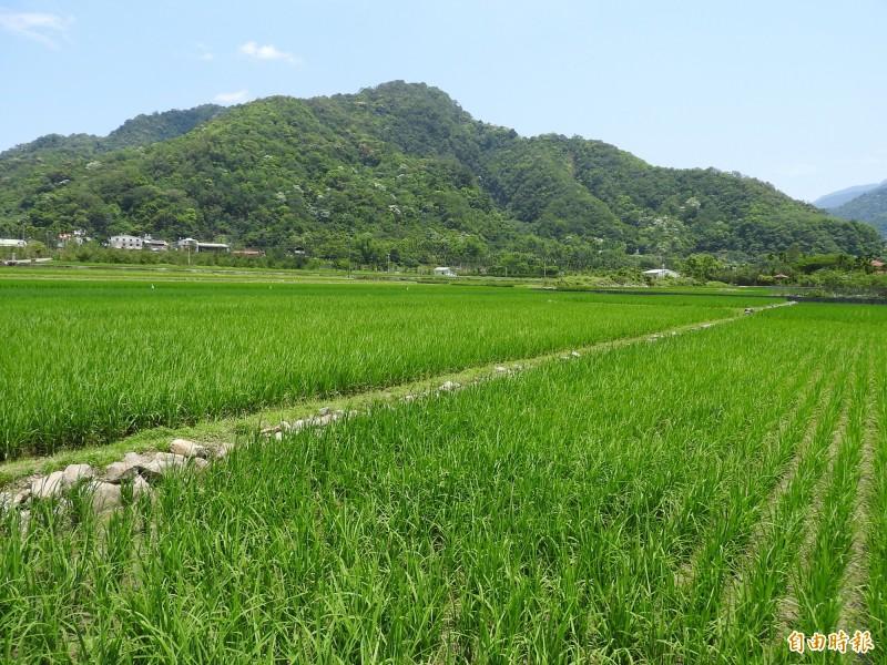 部落頭香!仁愛鄉互助、新生村明年納入水利會灌區