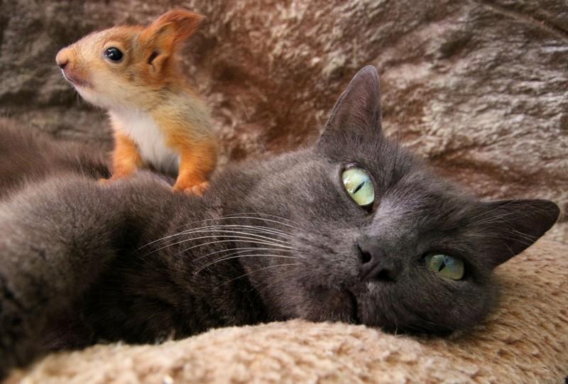 小松鼠爬到普沙頭上撒野。(路透)