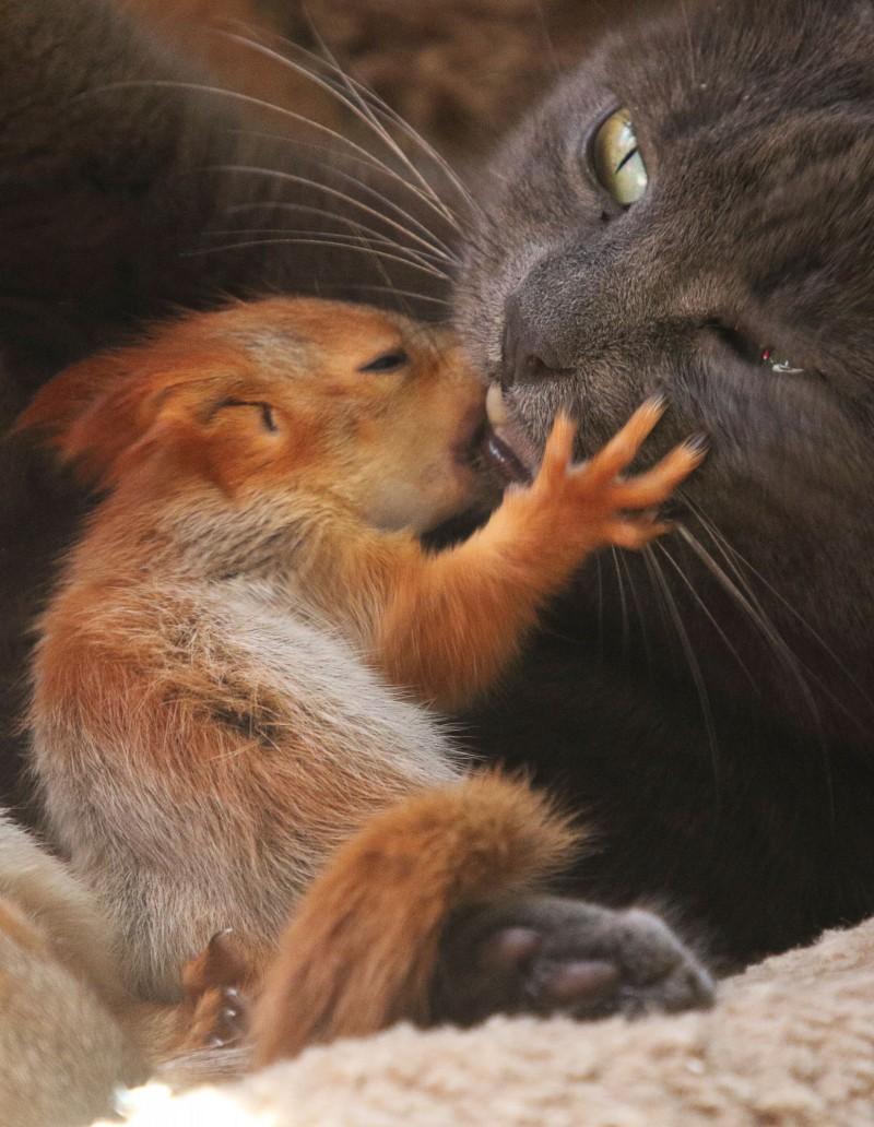 貓貓普沙和小松鼠親親。(路透)