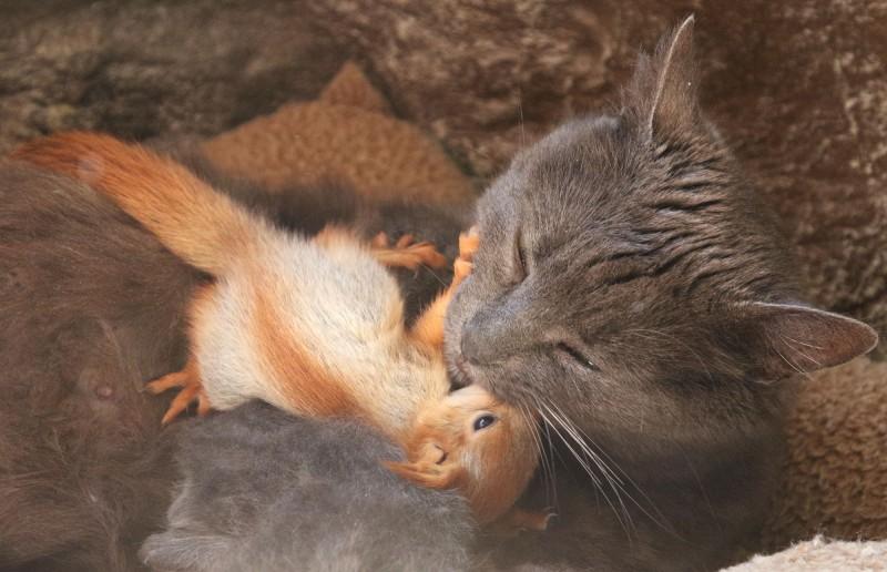 在小松鼠打鬧撒野後,貓貓普沙仍溫柔地和這些小可愛抱抱又親親。(路透)