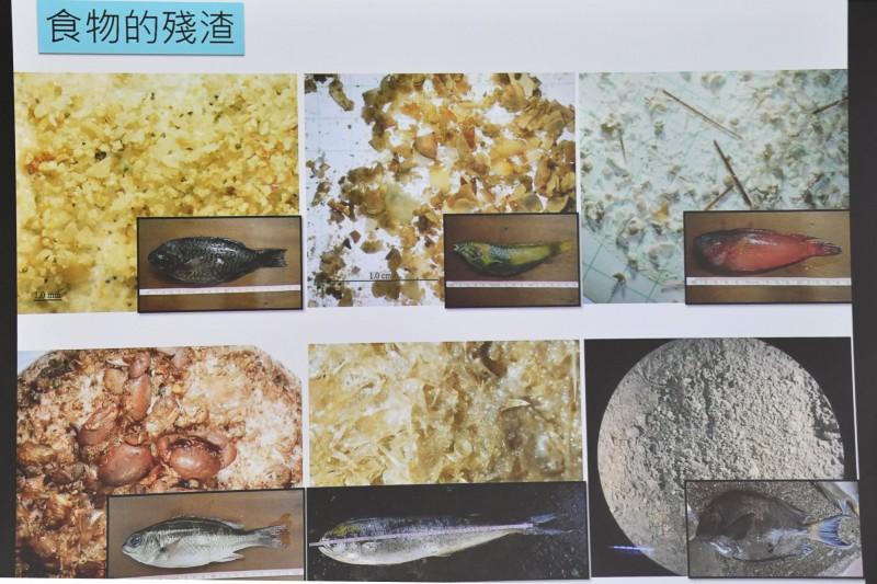 海洋廢棄物問題嚴重,魚類體內都殘留塑膠。(記者蔡宗憲翻攝)