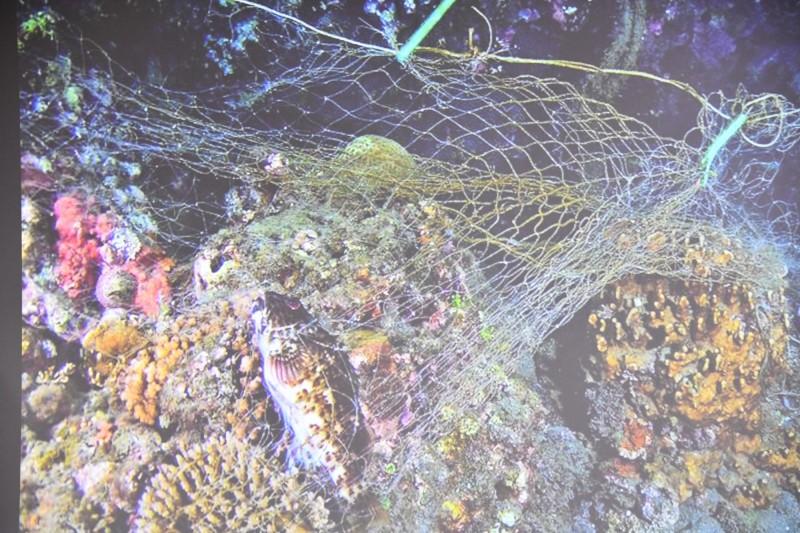 大型海廢纏繞海洋生物死亡。(記者蔡宗憲翻攝)