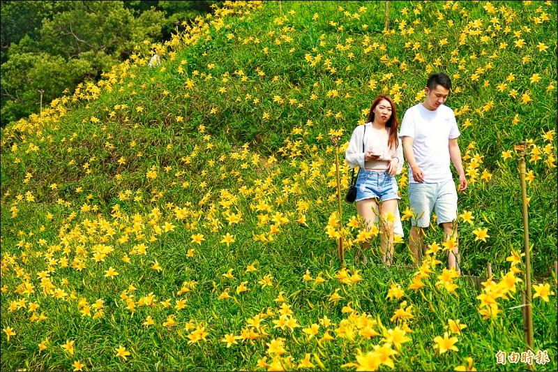 彰化花壇虎山巖的金針花盛開了,吸引各地遊客來賞花!(記者劉曉欣攝)