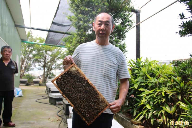 頭份蜂農徐陳森表示,今年龍眼、荔枝花期大亂,苗栗蜜蜂無用武之地,蜂農只能期待五月的百花蜜彌補收入,並期待政府予以天然災害補助。(記者鄭名翔攝)