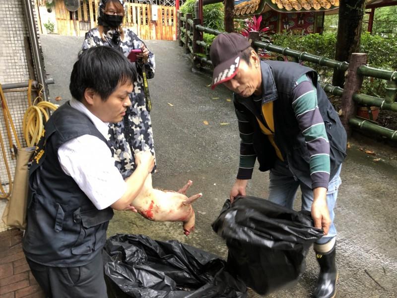 民眾在水槽宰殺山羌,被依違反野生動物保育法開罰6萬元。(基隆市動物保護防疫所提供)