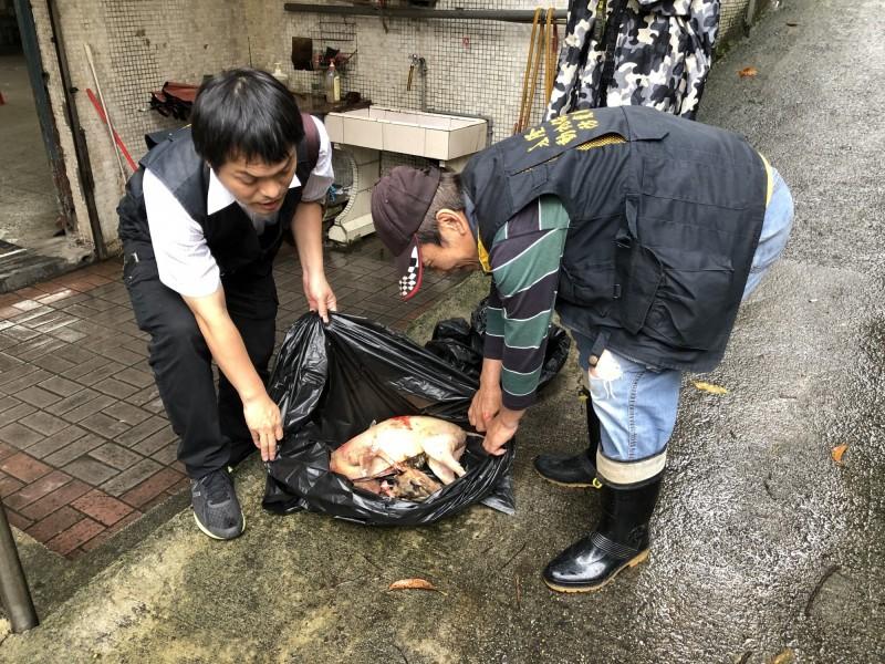 動保所提醒,山羌今年已從保育類野生動物除名,降為一般野生動物,但仍受野生動物保育法規範,不得任意獵捕或宰殺。(基隆市動物保護防疫所提供)