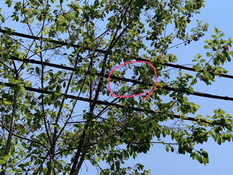 紅線中為遭子彈射擊損壞的台電電纜線。(記者蔡宗勳翻攝)