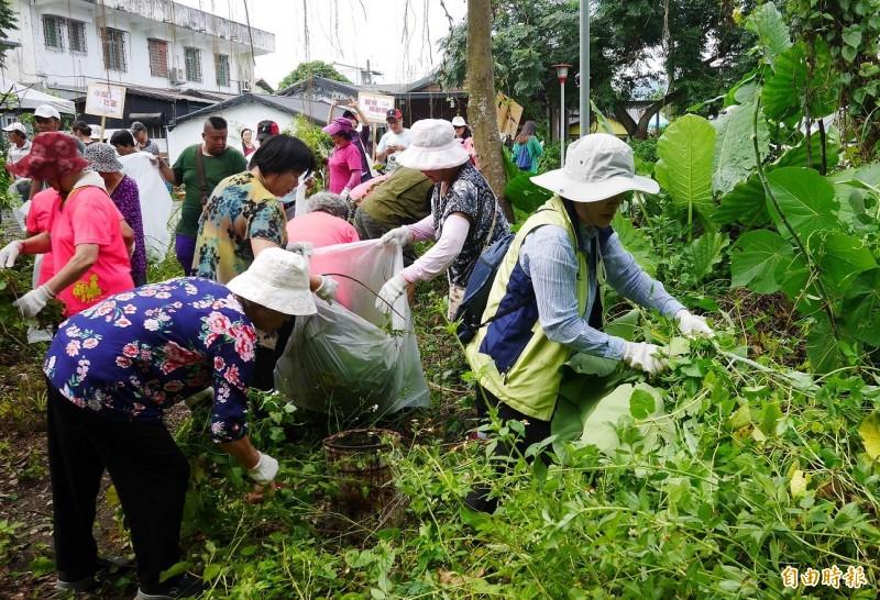 花蓮農政單位每年雇工清除小花蔓澤蘭及銀膠菊,年平均收購數量可達上百公噸。(資料照)