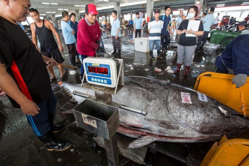 慶祝母親節,今年最大尾、重達369公斤黑鮪魚來報到。(擷自林復從臉書)