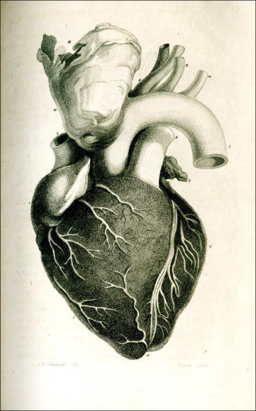 刊登於一八一二年四月一日發行的新英格蘭醫學期刊中一張人類心臟繪圖。 (美聯社)