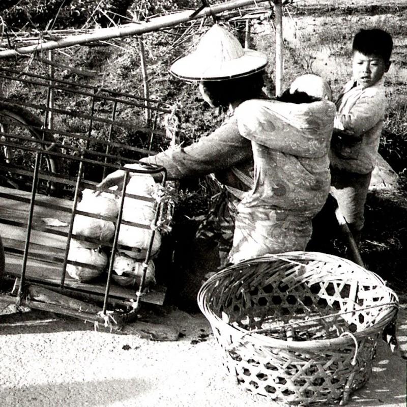 半世紀前的台灣媽媽,背著娃娃,顧著小孩,還要疊起高麗菜。(鐘清溪提供)