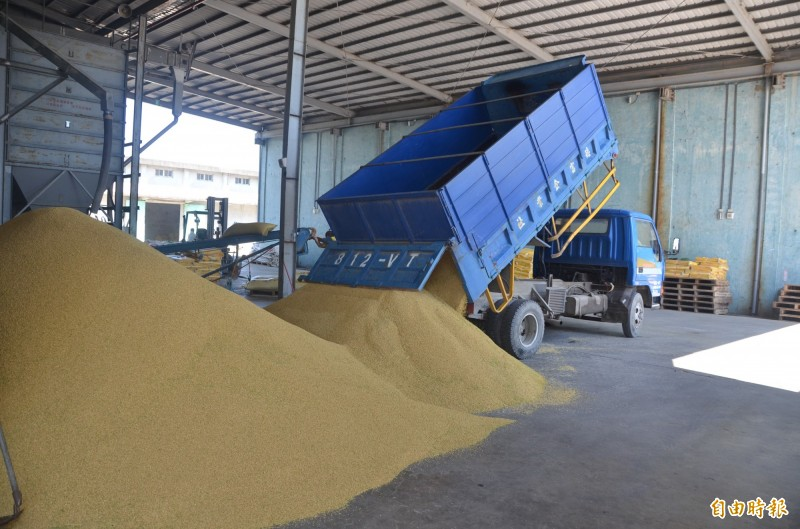 一期稻作公糧開始收購了