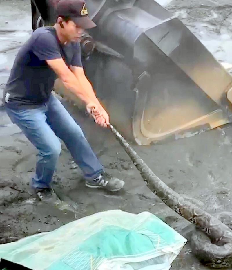 高屏溪疏濬作業過程中,怪手不慎挖到巨蟒,民眾努力將巨蟒拖拉出挖斗情形。(記者謝介裕翻攝)