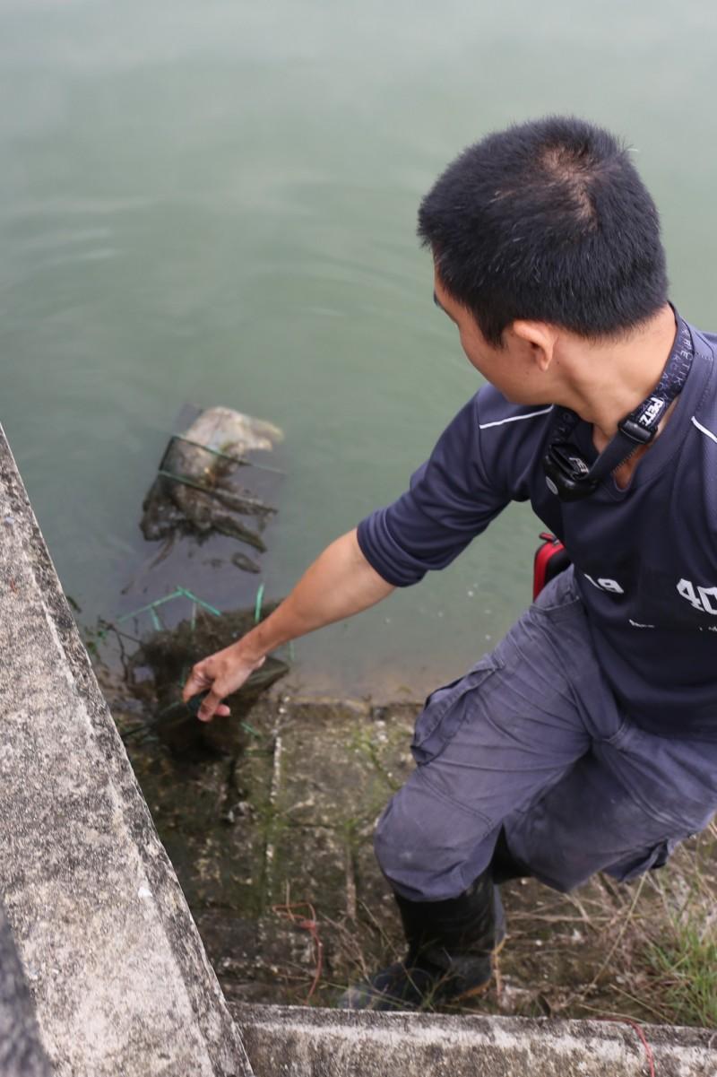 保育人員在金沙水庫發現一隻水獺在蜈蚣網內已死亡多時,準備拖帶上岸。(圖由金門縣政府提供)
