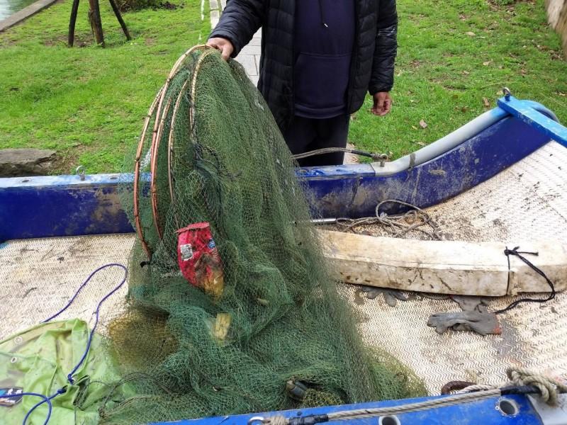 縣府說,對水獺體型,蜈蚣網比其他魚網對水獺的殺傷力更大。(圖由金門縣政府提供)