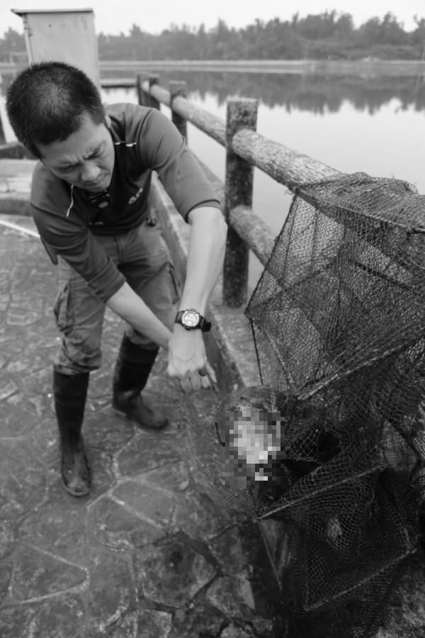 保育人員將蜈蚣網內的死亡水獺取出。(圖經變色處理,金門縣政府提供)