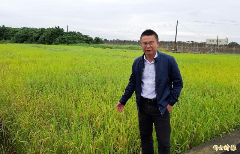 農糧署南區分署長姚志旺視察台南一期稻作生長,說明今年一期作公糧收購數量提高。(記者楊金城攝)