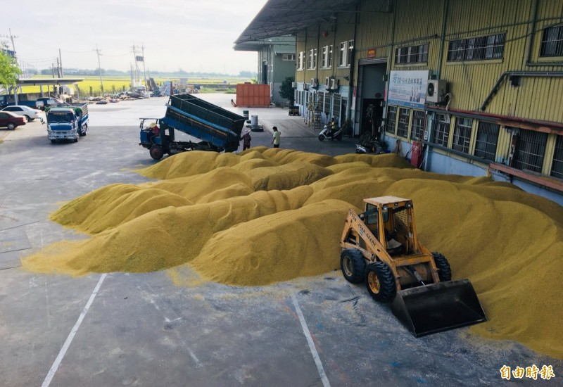 去年台南糧商收購稻穀滿倉。(資料照)