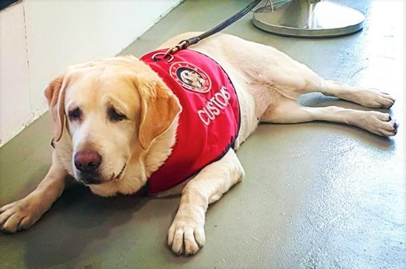 其中一隻拉不拉多防疫犬的可愛表情也被拍下,引來網友留言,「這個臉你跟我說凶猛?」。(圖取自海洋委員會臉書粉絲專頁)